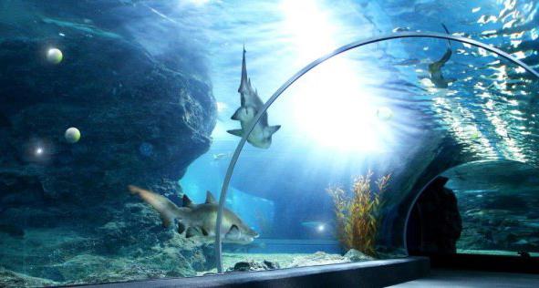 океанариум на Чистых прудах