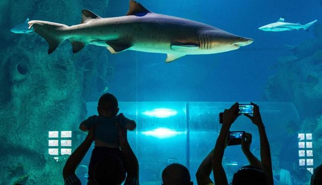 аквариум в отеле «Мандалай Бэй»