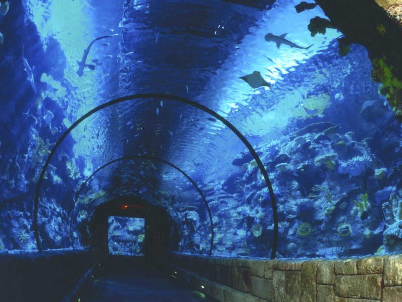 аквариум в казино Gulfstream Racetrack