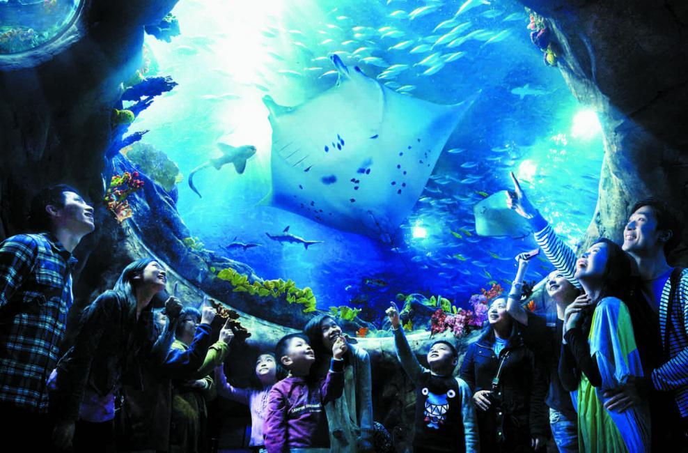 аквариум в казино «Силвертон»